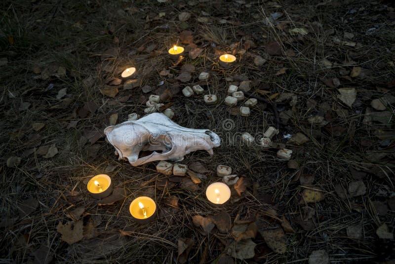 Schöne Halloween-Zusammensetzung mit Runen, dem Schädel, Tarock und Kerzen auf dem Gras im dunklen Herbstwaldritual lizenzfreies stockfoto