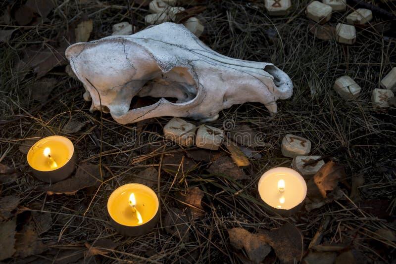 Schöne Halloween-Zusammensetzung mit Runen, dem Schädel, Tarock und Kerzen auf dem Gras im dunklen Herbstwaldritual lizenzfreie stockfotos