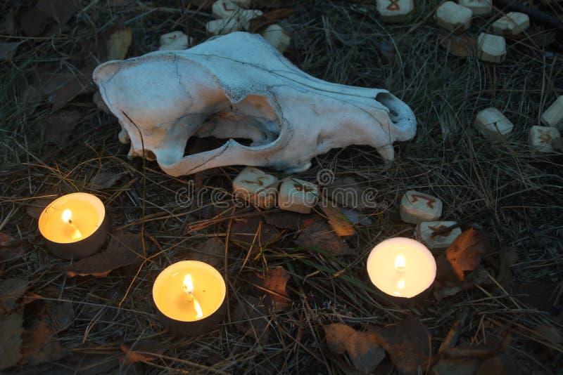 Schöne Halloween-Zusammensetzung mit Runen, dem Schädel, Tarock und Kerzen auf dem Gras im dunklen Herbstwaldritual stockfotos