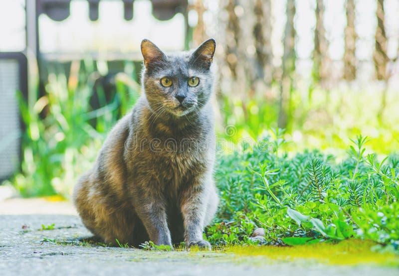Schöne Hauskatze, die im Garten sitzt stockfotografie
