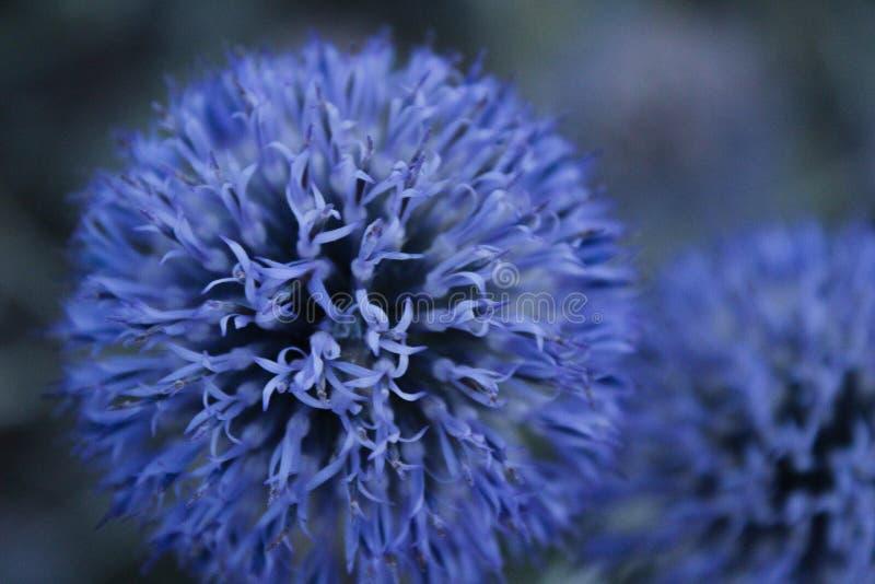 Schöne heftige Blume im Grasland stockfotos