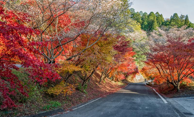 Schöne Herbstfarbjahreszeit an Obara-Dorf lizenzfreies stockfoto