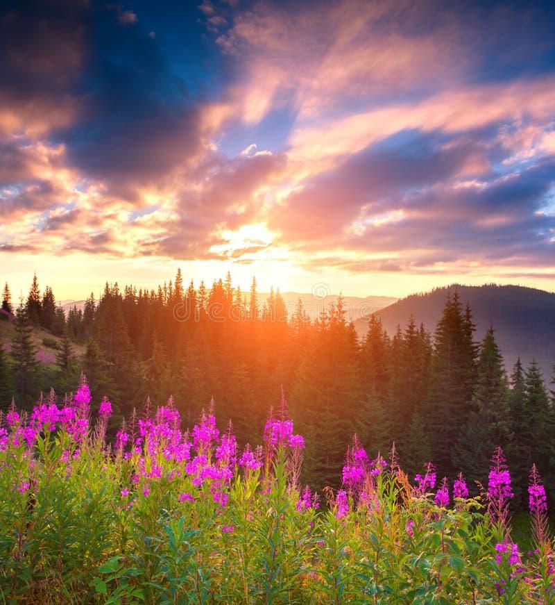 Schöne Herbstlandschaft in den Bergen mit rosa Blumen stockfoto