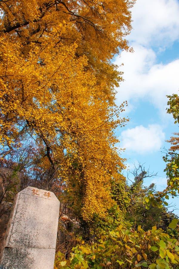 Schöne Herbstlandschaft Laoshan-Berges von China lizenzfreie stockfotos