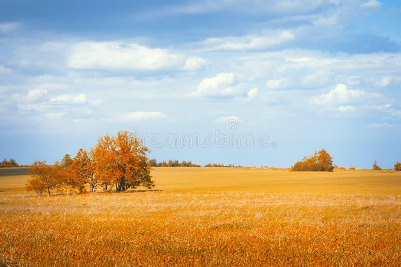 Schöne Herbstlandschaft am Morgenpark stockfoto