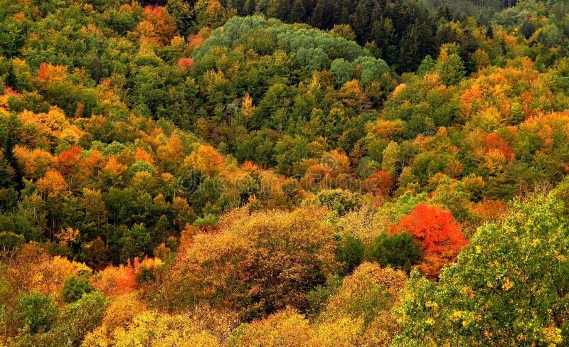 Schöne Herbstlandschaft in Toskana lizenzfreie stockbilder
