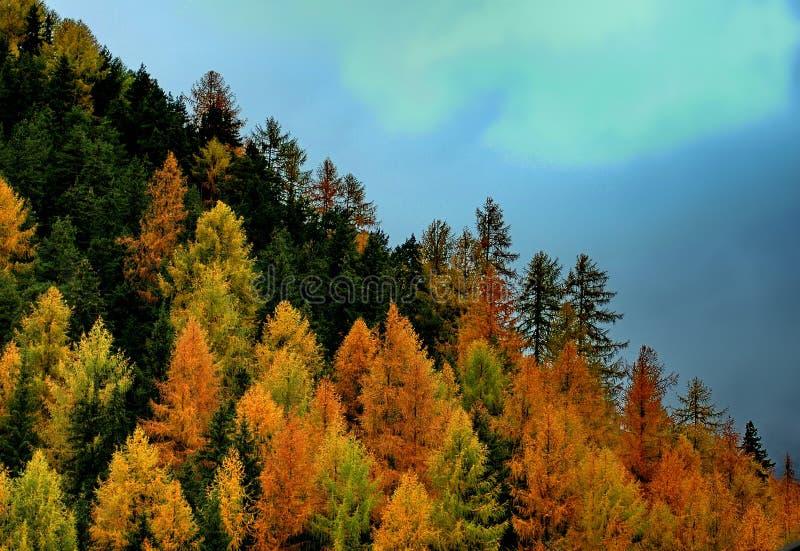 Schöne Herbstlandschaft in Toskana stockfotos