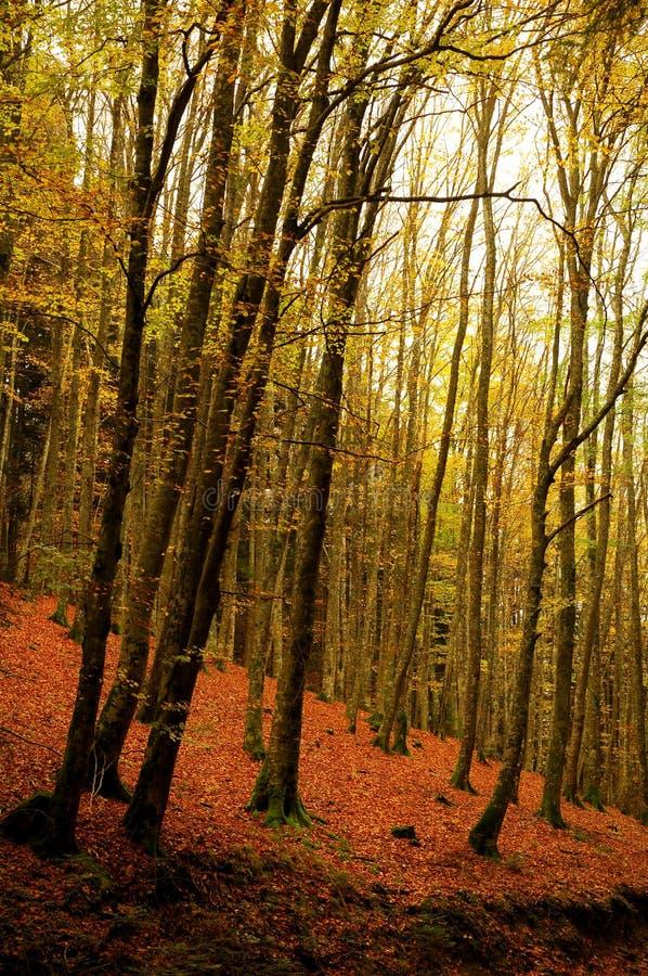 Schöne Herbstlandschaft in Toskana lizenzfreies stockbild