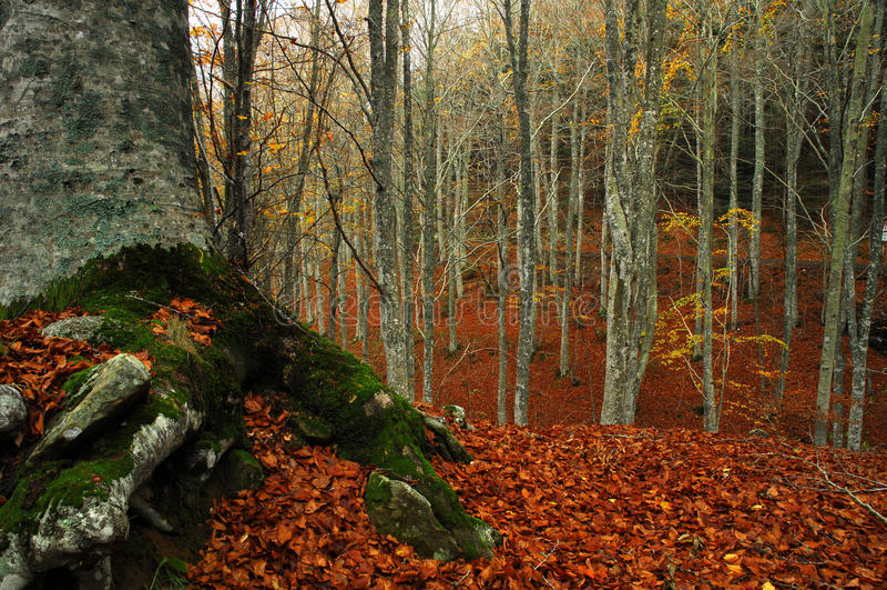 Schöne Herbstlandschaft in Toskana stockbilder