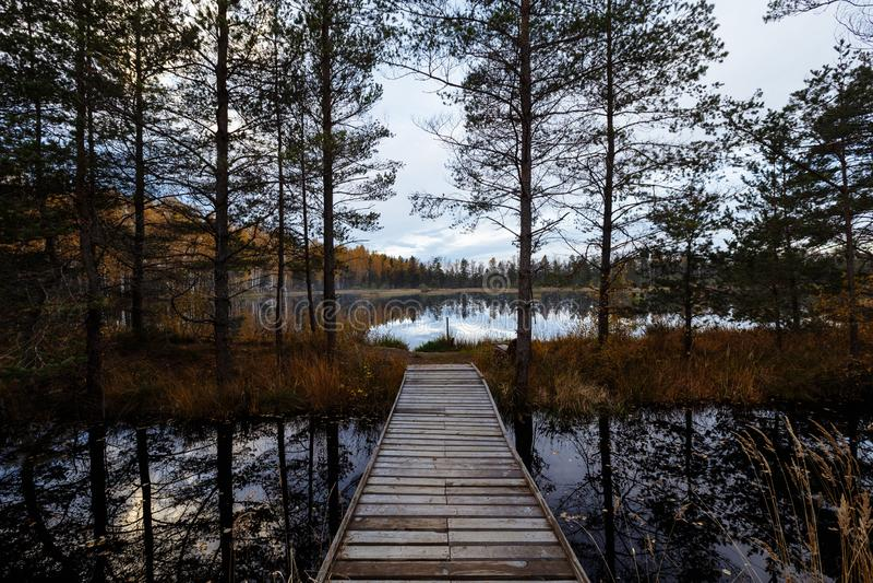 Schöne Herbstlaubbäume mit Blick der schönen Kunst bunte weiche Weinlese Forest Park Herbstlandschaftshintergrund A lizenzfreie stockfotografie