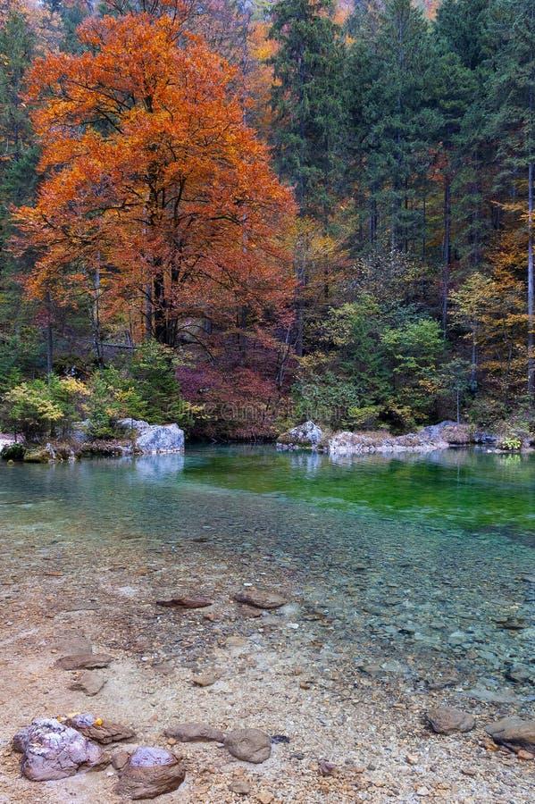 Schöne herbstliche Szene des Waldes durch Bach lizenzfreie stockfotos