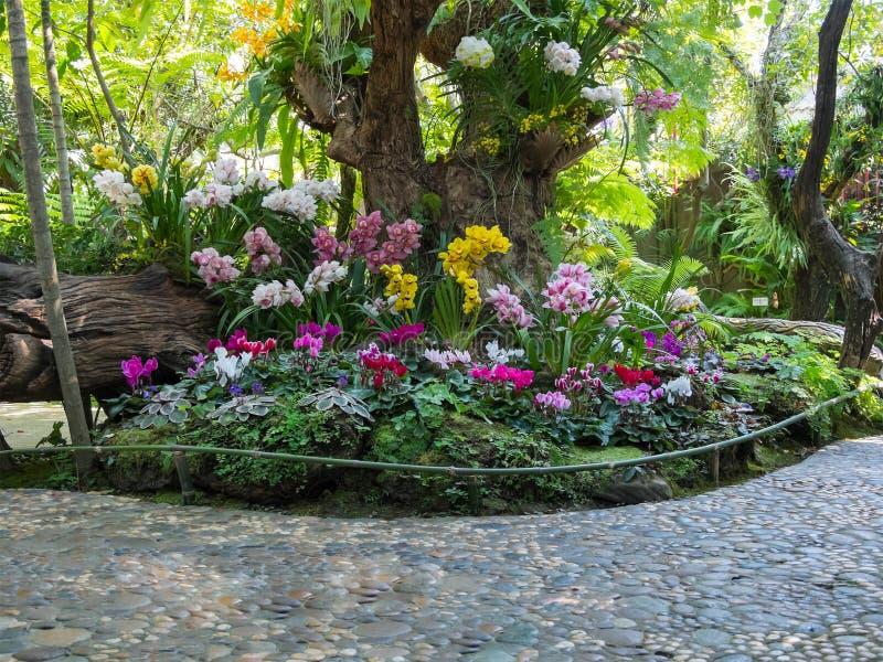 Schöne Hinterhofgarten-Parkszene stockbild