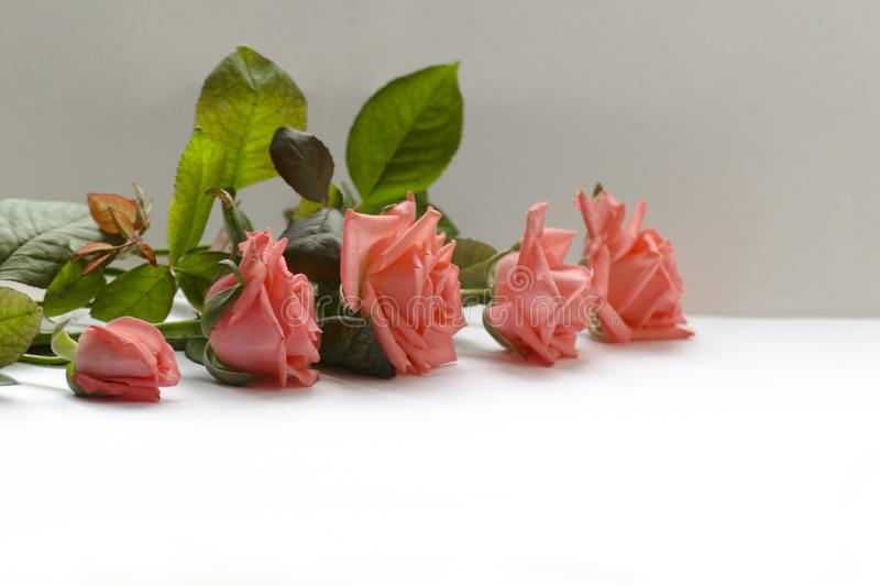 Schöne Jahreszeit der Blume im Frühjahr lizenzfreie stockfotografie