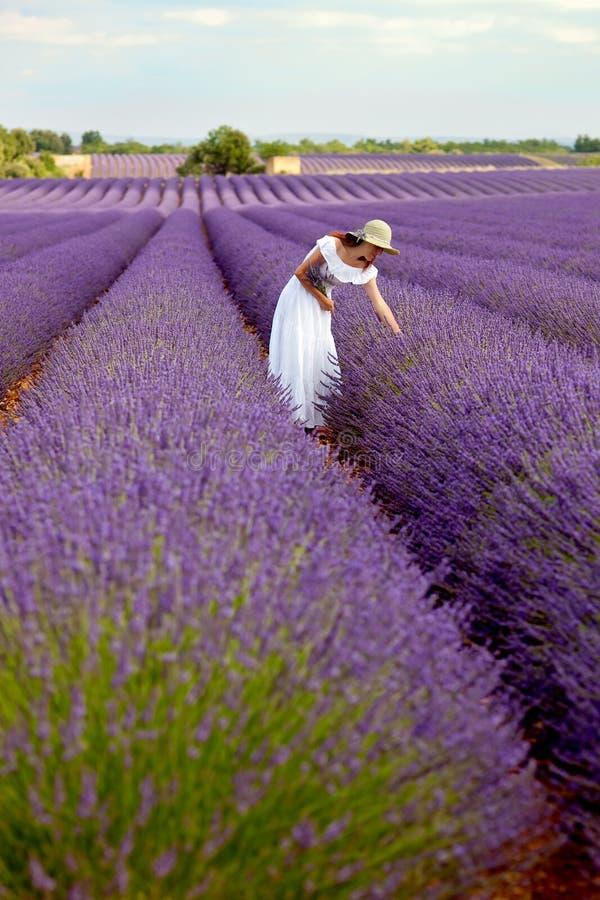 Schöne junge Dame, die etwas Lavendel auf dem Lavendelgebiet auswählt. PR stockfotos