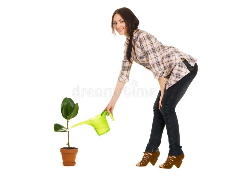 Schöne junge Frau, die eine Anlage wässert lizenzfreies stockbild