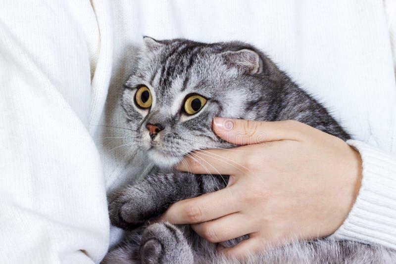 Schöne junge Frau mit der netten Katze, die zu Hause stillsteht Schottisches Kätzchen stockbilder