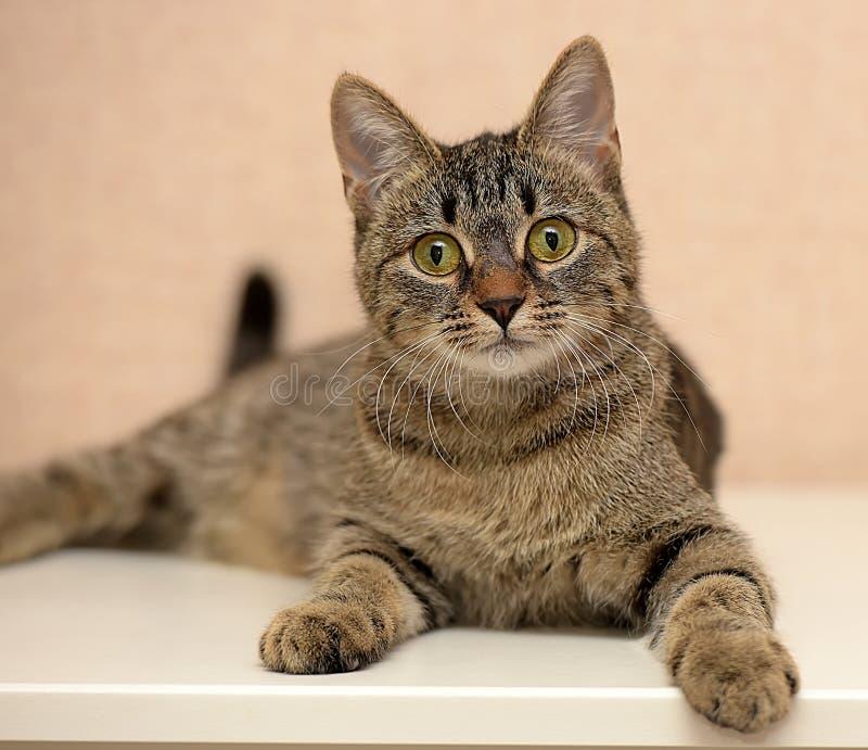 Schöne junge Katze der getigerten Katze lizenzfreie stockfotografie