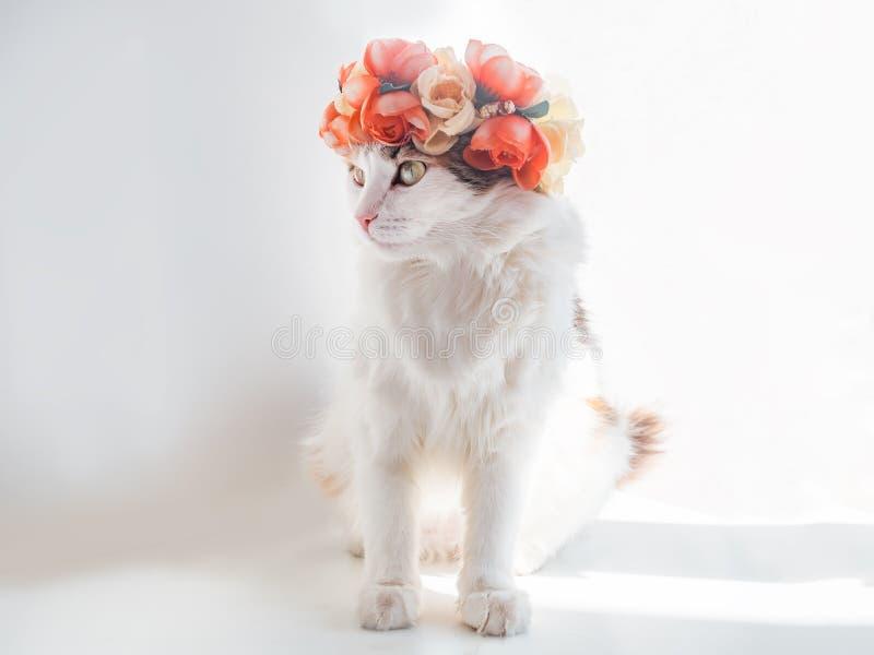 Schöne Kaliko-Katze mit einem Kranz auf seinem Kopf Nette Miezekatze in einem Blumendiadem auf ihrem Kopf sitzt in der Sonne und  lizenzfreies stockbild