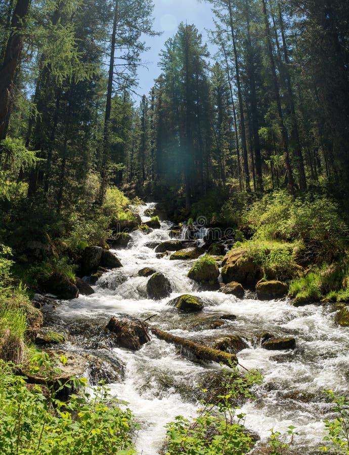 Schöne Kaskade von kleinem Gebirgsfluss am tiefen sibirischen Wald lizenzfreie stockfotografie