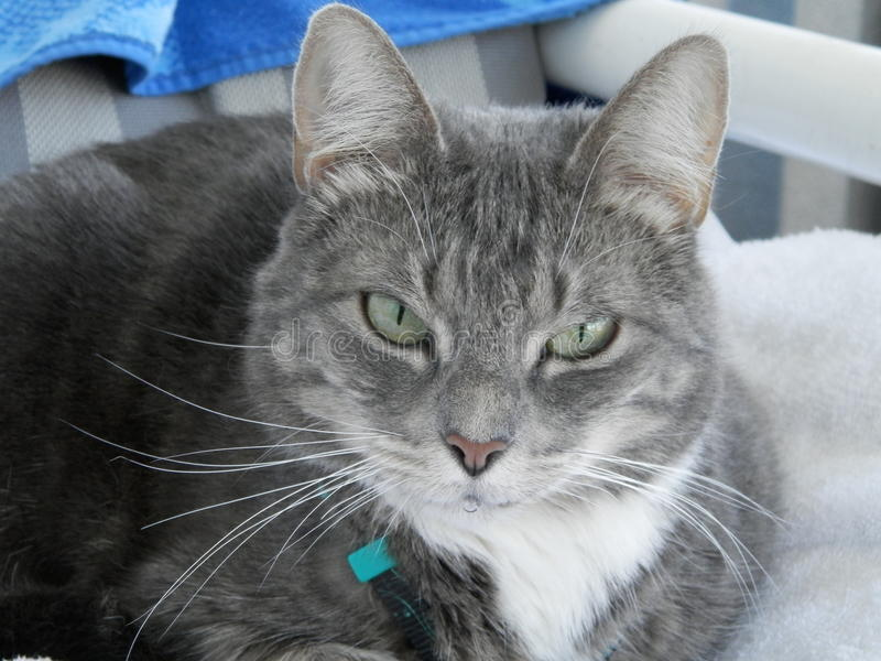 Schöne Katze lizenzfreie stockfotos