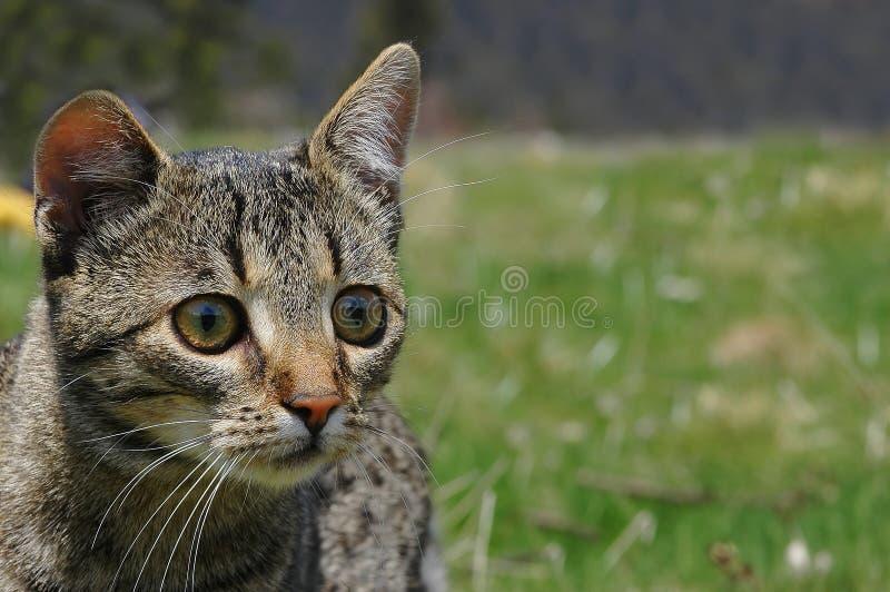 Schöne Katze stockfotografie