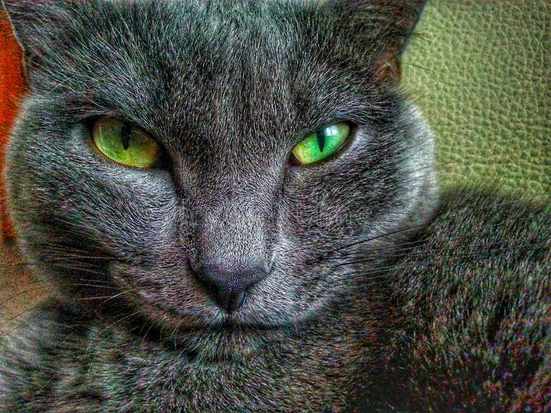 Schöne Katze stockfotos
