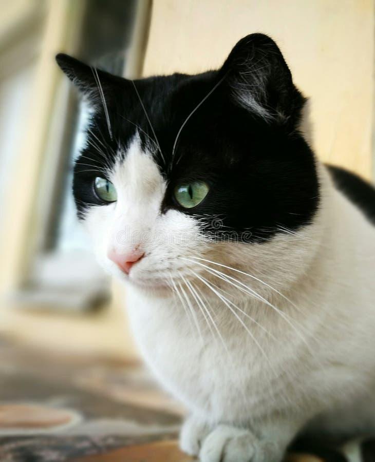 Schöne Katze stockbilder