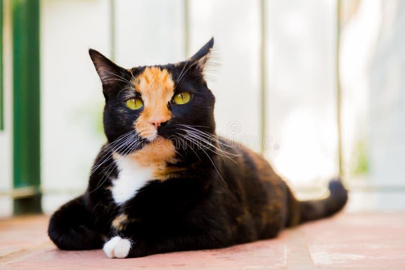 Schöne Katze der Kalikoschildpatt-getigerten Katze, die auf einem Balkon liegt lizenzfreie stockfotos