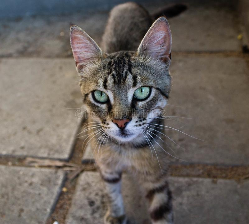 Schöne Katze im Freien, die in einem warmen Land lebt lizenzfreie stockbilder