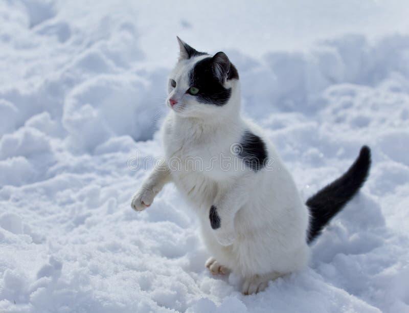 Schöne Katze im Schnee stockfotos