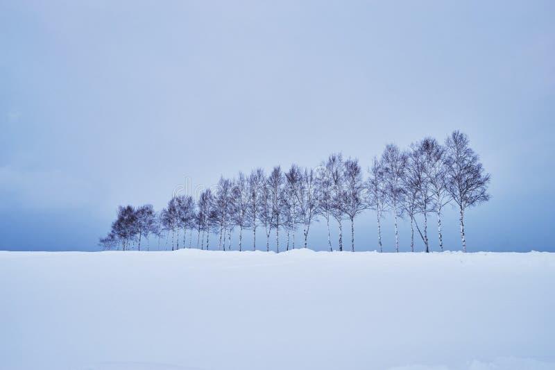 Schöne Kiefer nahe 'Stern sieben kein ki 'entlang der Patchworkstraße im Winter an Biei-Stadt stockbilder