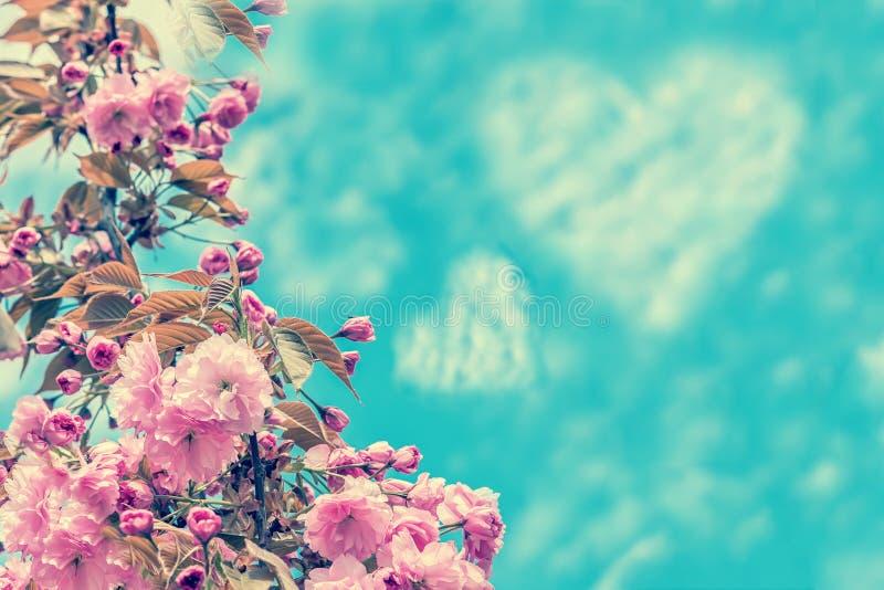 Schöne Kirschblüte-Blumenkirschblüte über dem blauen Himmel und Herz formen Wolken Grußkarten-Hintergrundschablone Flache Tiefe stockfoto