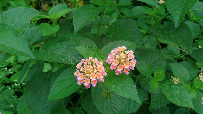 Schöne kleine Blumen mit grünen Blättern stockfoto