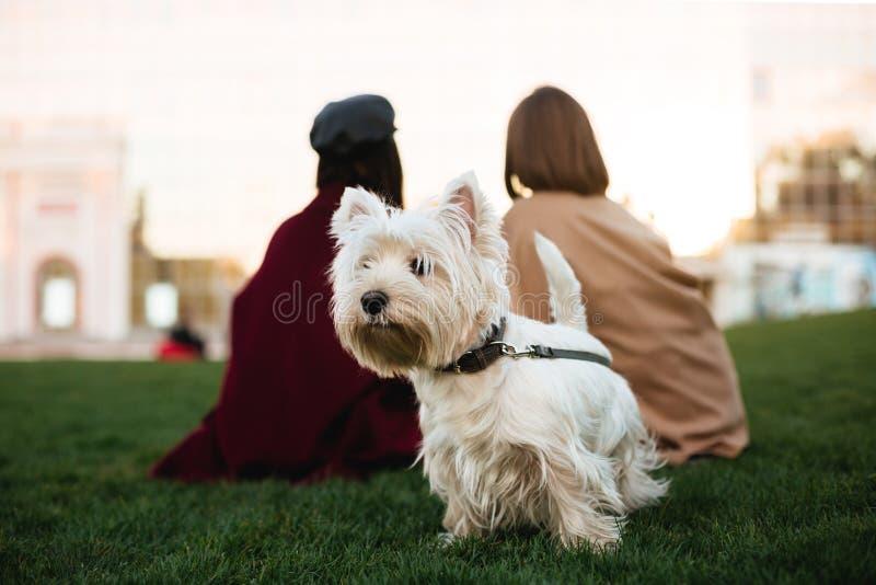 Schöne kleine weiße Hundestellung auf Gras im Park mit Eigentümer auf Hintergrund lizenzfreie stockfotos