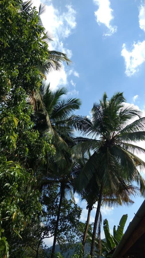Schöne Kokosnussbäume stockfotos