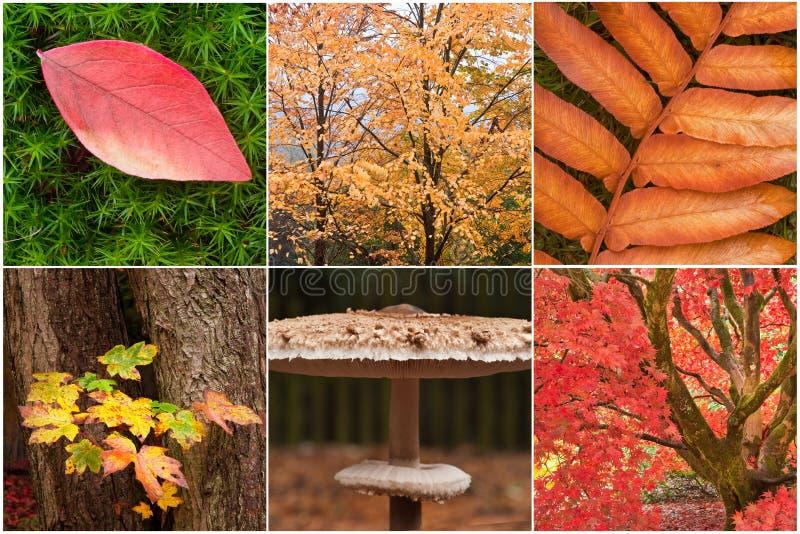 Schöne Kompilation der Herbst-Fallbilder stockfoto