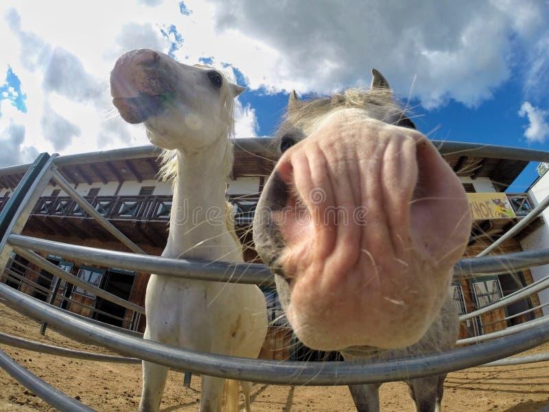 Schöne lächelnde Pferde lizenzfreies stockfoto