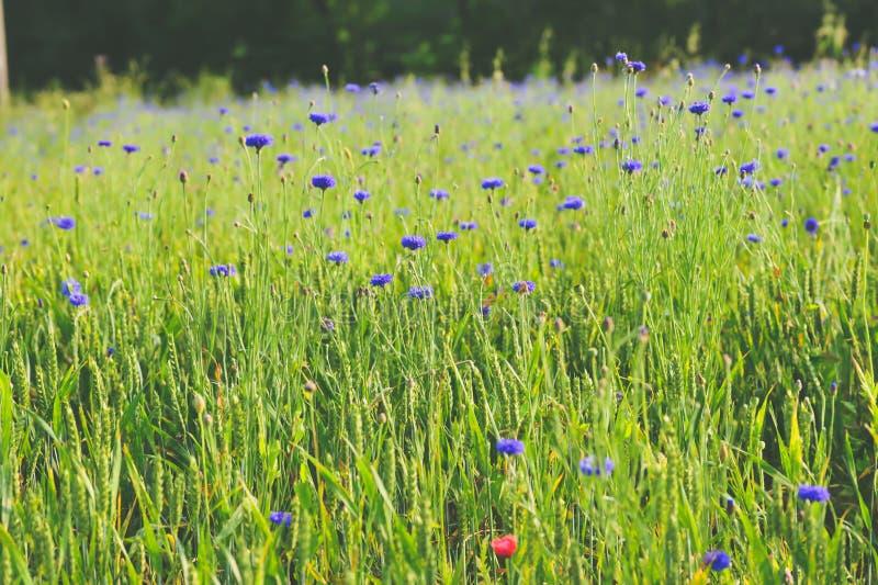 Schöne Landschaft auf dem Blumengebiet lizenzfreies stockfoto