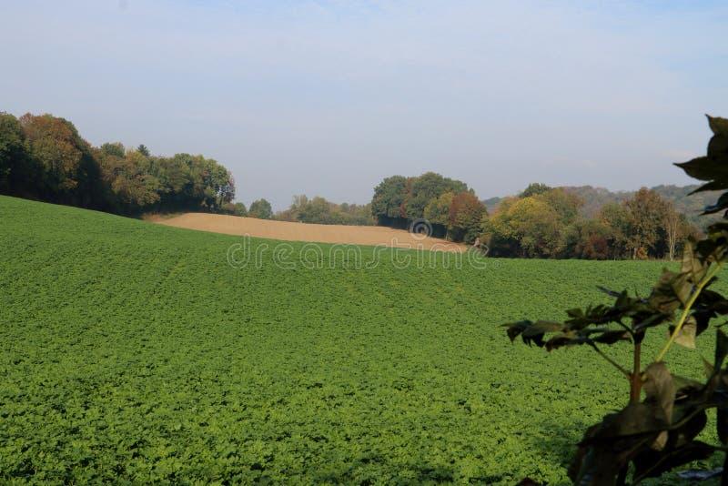 Schöne Landschaft in den Niederlanden stockbilder