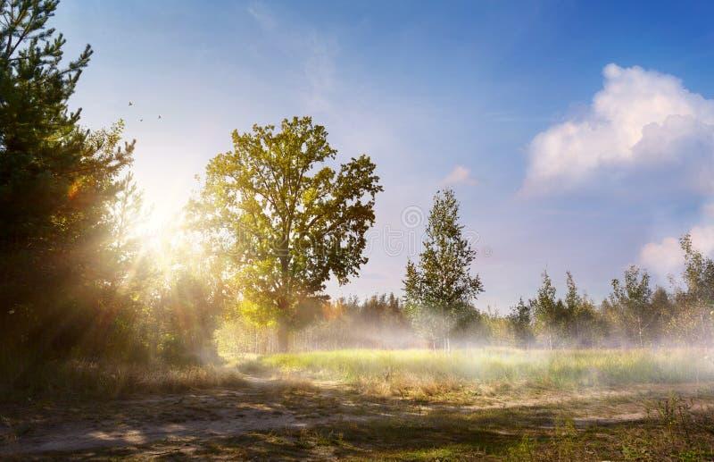 Schöne Landschaft der Kunst mit alter Waldbank und großer Eiche stockfotografie