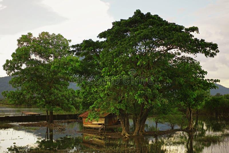schöne Landschaft der Sümpfe um das Dorf mit einigen großen Bäumen und einem traditionellen Pfahlhaus lizenzfreie stockbilder