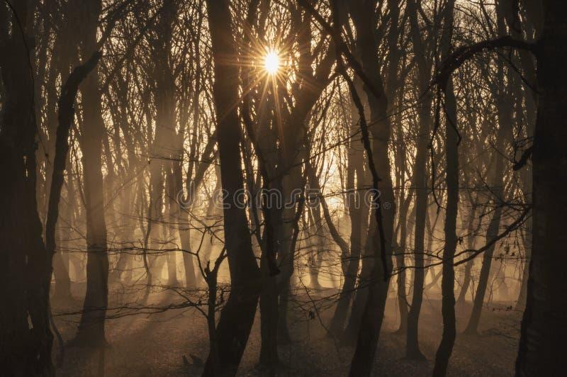 Schöne Landschaft des Winterwaldes zur Sonnenuntergangzeit Sun-Licht im nebelhaften toten Herbstwald Aserbaidschan Gabala Ismaill stockfotos