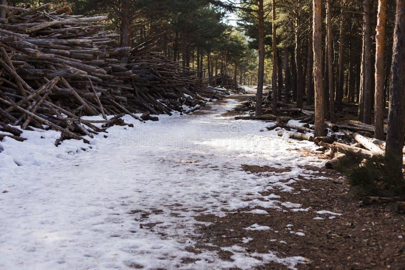 Schöne Landschaft eines schneebedeckten Weges mitten in der Waldnatur im Winter stockfotografie