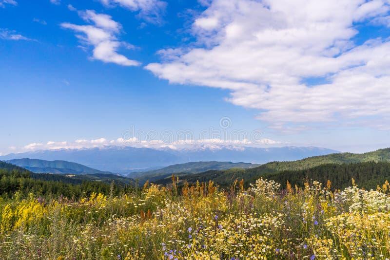 Schöne Landschaft - Feld von Wildflowers, von Pirin-Bergen und von schönem blauem Himmel nahe Bansko, Bulgarien lizenzfreies stockfoto