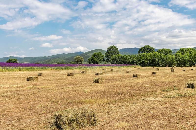 Schöne Landschaft, gelbes Feld mit Heuschobern, lila Blumen, grüne Bäume und Berge und blauer Himmel mit großen weißen Wolken lizenzfreie stockbilder