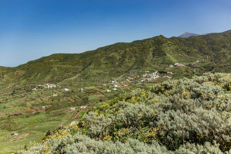 Schöne Landschaft grünen Palmar Tales EL im Frühjahr Spitze des Vulkans Teide umfasst durch Schnee im weiten Hintergrund clear lizenzfreie stockfotos