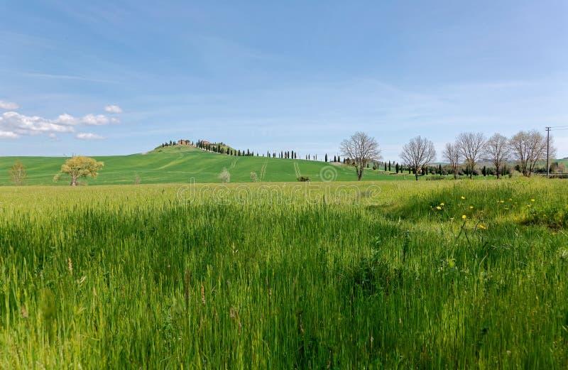 Schöne Landschaft idyllischer Toskana-Landschaft im Frühjahr, wenn eine Wicklungslandstraße mit Zypressenbäumen gezeichnet ist stockbild