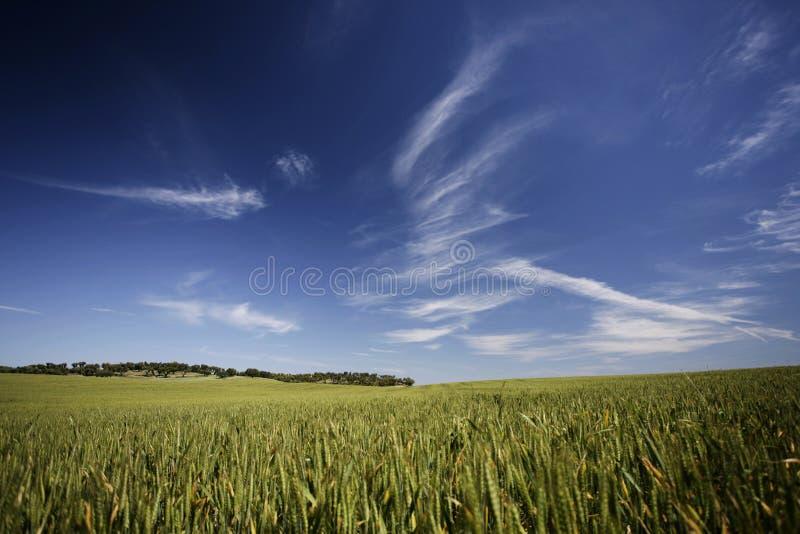 Schöne Landschaft im Frühjahr lizenzfreie stockbilder
