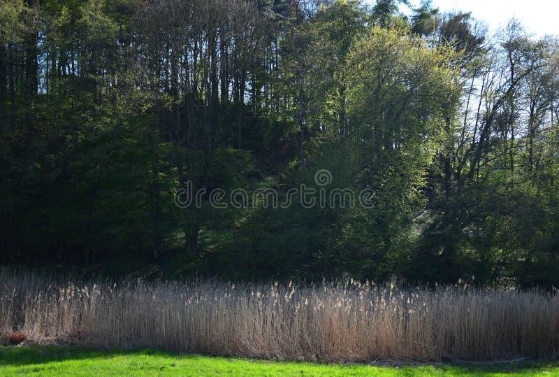 Schöne Landschaft im Frühjahr mit Wald und Schilf im Odenwald, Deutschland lizenzfreie stockbilder