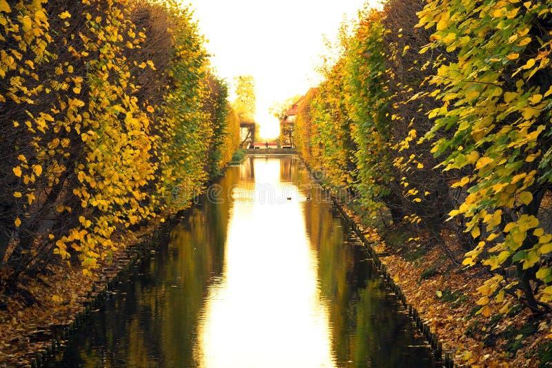 Schöne Landschaft Im Gelben Park Stockbild